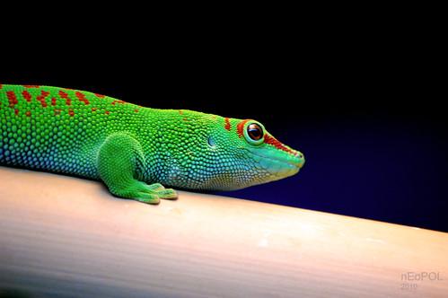 Reptile 'n' Bamboo