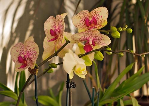 orchids: April 2010
