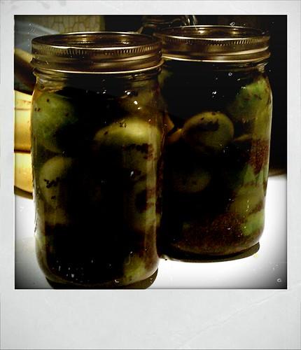 Fermented Green Tomatoes - Xolaroid 2000