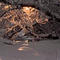 Golden Light on Branches