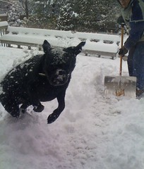Magic jumping in the snow