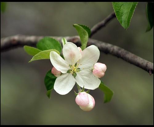 spring in white