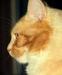 Bendy in profile