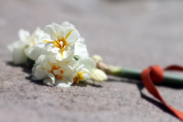 Daffodilgathering-1