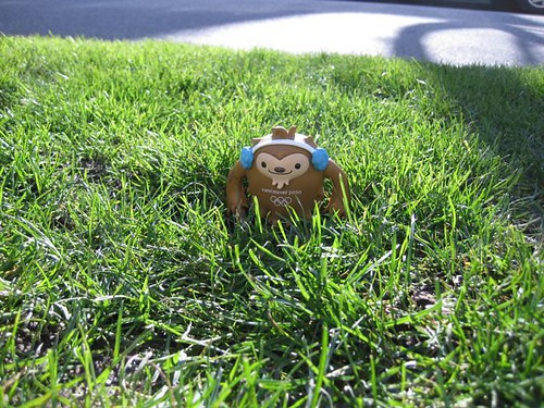 Quatchi in the grass.