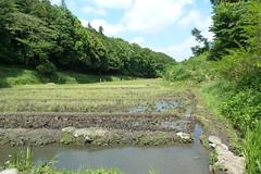 新治市民の森(Niiharu Community Woods, Japan)
