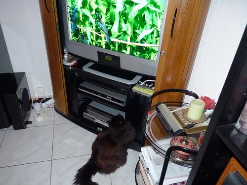 Nera watching her favourite tv programme