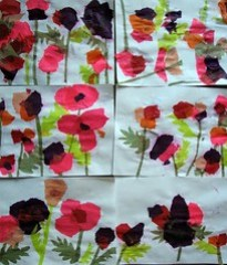 Tissue Poppies