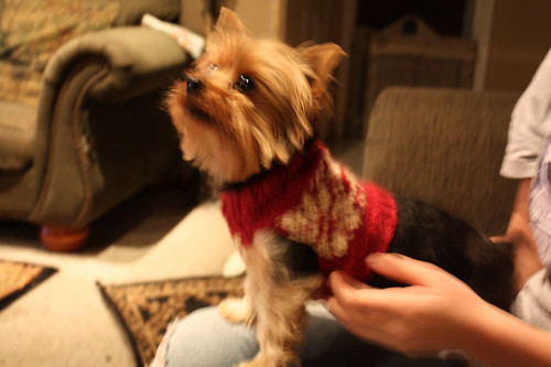 Maggie Modelin' her Sweater
