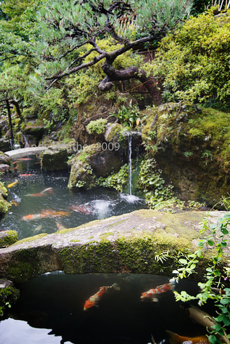 pond waterfalls
