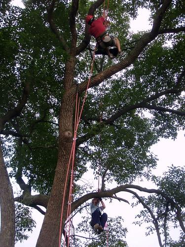 treeclimbing-02