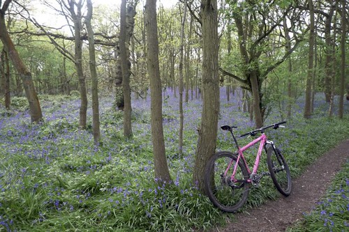 bluebell ride