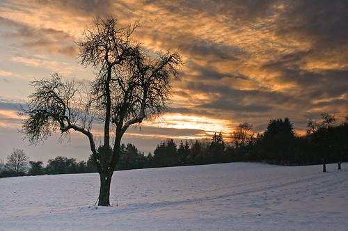 Jahreszeitenbaum im Februar