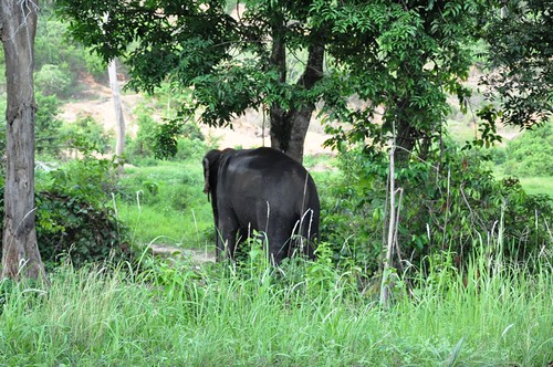 07_Koh_Chang_Elephant