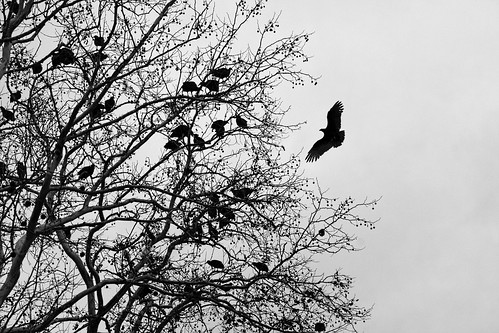 The Vultures Roost