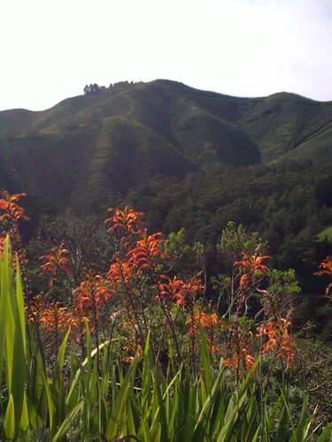 Flowers in the Marin Headlands