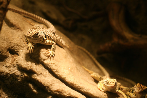 Lizards and Snakes: Alive! And Mostly Creepy!
