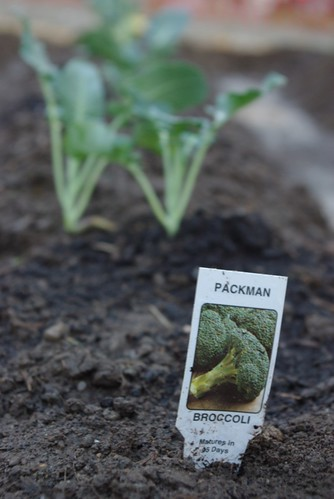 Packman Broccolli