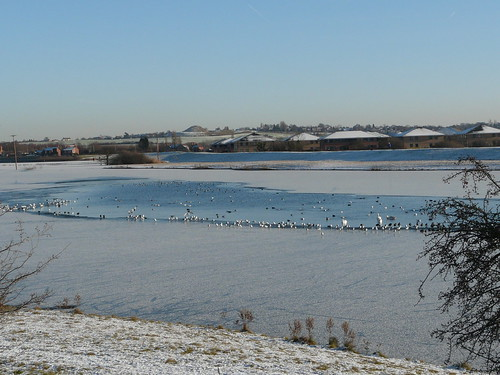 Calder Wetlands