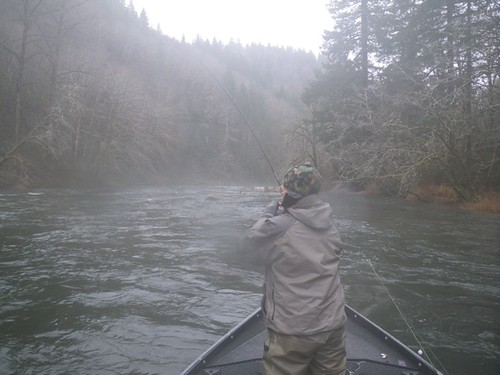 Fighting a Lake Creek Steelhead