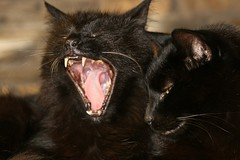 Trouble Yawns