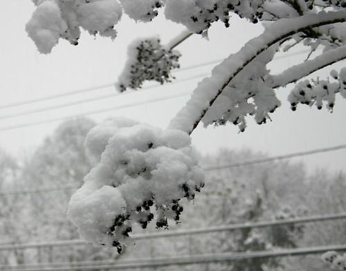 Snowpocalypse2010