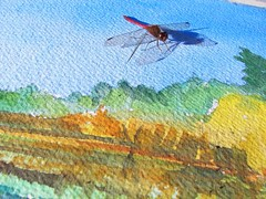 Dragonfly lands while I'm painting