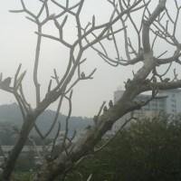 台大校園_麻雀排排站