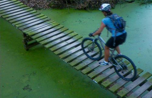 Swamp Riding