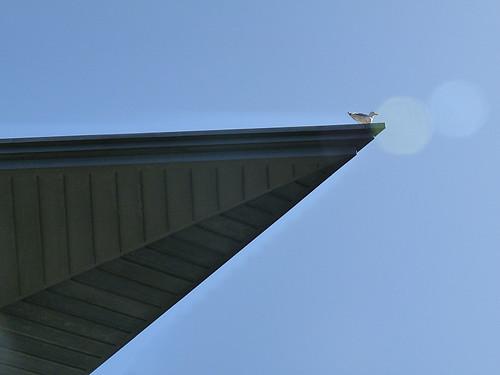 Gull on roof's edge