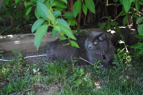 Bush Kitty