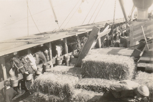 Horse stalls and hay bales on deck, Poland, summer 1946