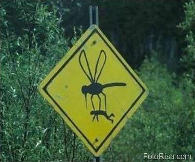 mosquitos asesinos[7]