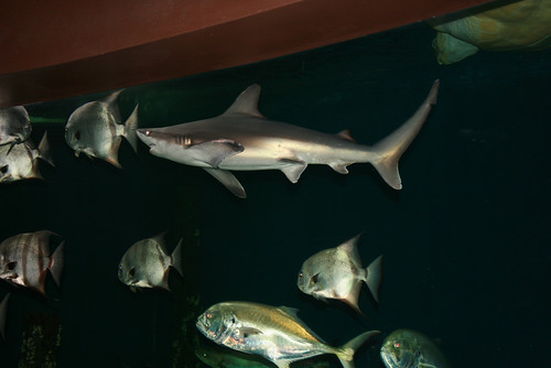 Wedding Weekend - Venue - Shark! (by Deanna Felton)