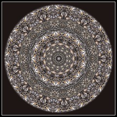 Sunflower Seed Kaleidoscope