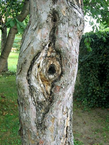 Baum mit Vulva