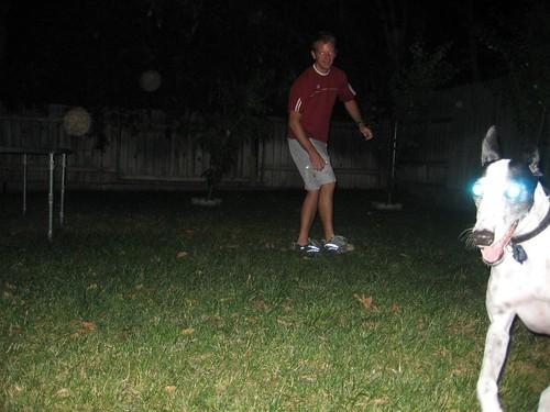 evil laser-eyed dog