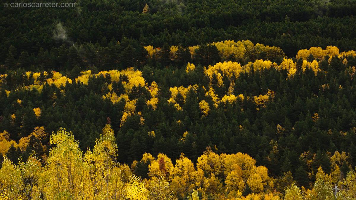 Huesca cuaderno de ruta v 3 0 for Ver fotos de arboles de hoja perenne