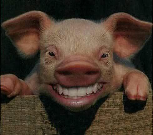 cerdo_riendo
