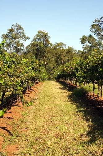 Brokenwood vineyard Get Your Hands Dirty Lunch
