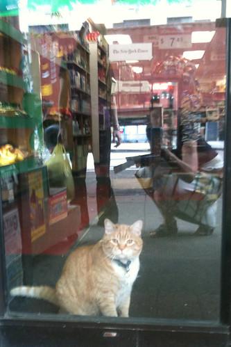 Guard Cat 115/365