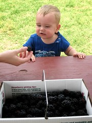 Berry Pickin': Sweet Berry Farms