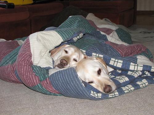 311/365 Lazy Dogs