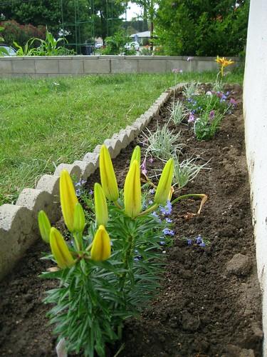 garden time, pt.7