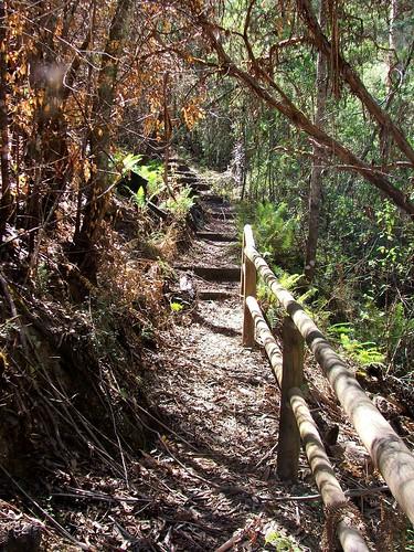 Bindaree Falls Trail