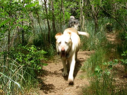 Luka chases Sadie