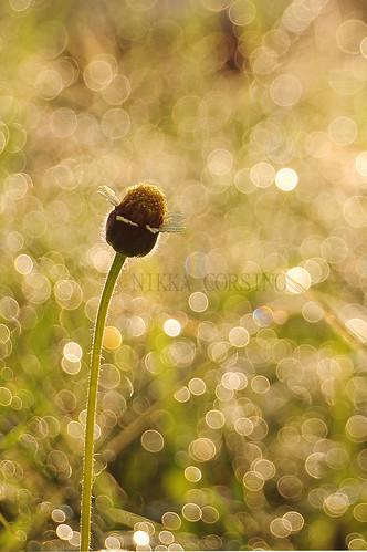 June 12 dewdrops