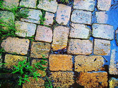 bricks, rain