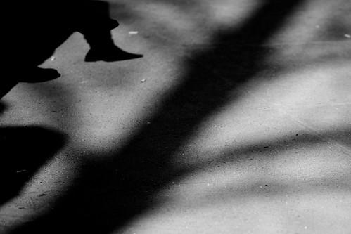 Boston Common Shadows