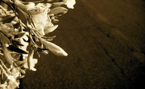 yellow flower redux